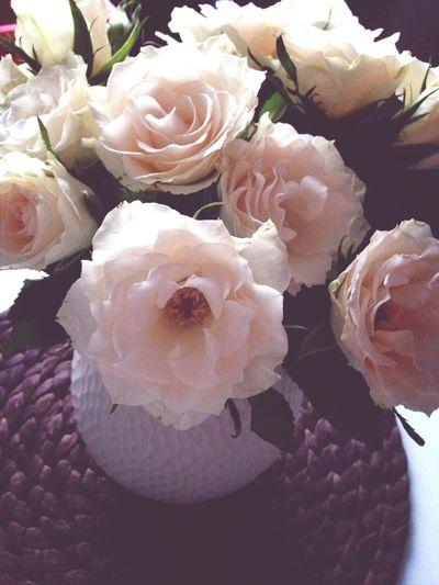 Roses Beautiful Love Flower