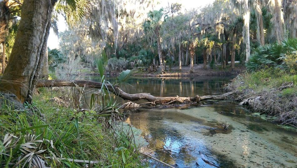 Gemini Spring's My Smartphone Life Htconem8 Android Florida Sunset #sun #clouds #skylovers #sky #nature #beautifulinnature #naturalbeauty #photography #landscape