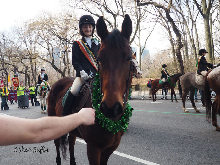Eringobragh Horse IrelandForever Newyorkcity NYC Parade Stpatricksday StPatricksDayParade