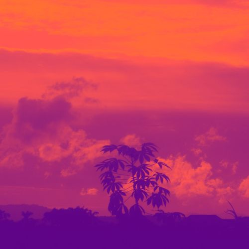 Low angle view of silhouette trees against dramatic sky