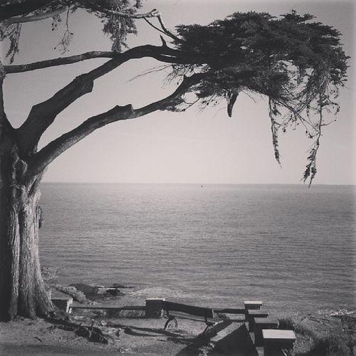 """2/2 ♥♥ """"arbre solitaire"""" Igf_midiminuit68 @igersfrance"""