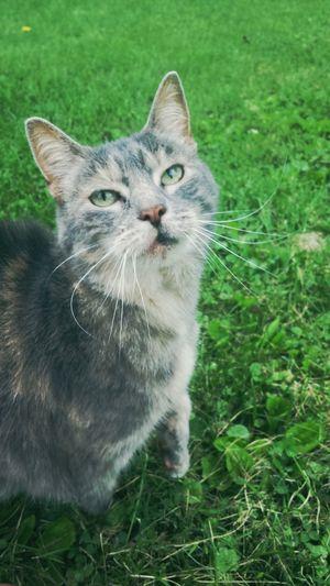 Cats Catoftheday