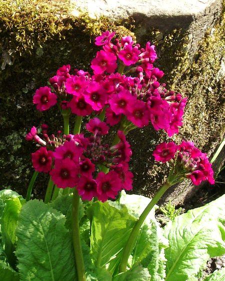EyeEm Best Shots Colours Of Nature Eyem Nature Lovers  Sunshine ☀ EyeEm Flowers Collection Eyem Flowers Pink Flowers Walking Around Didsbury Fletcher Moss