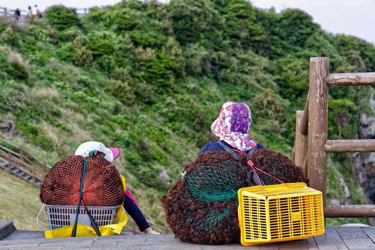 Jeju South Korea Haenyeo Rear View Women Landscape Nature Adult Basket Real People Container Rural Scene