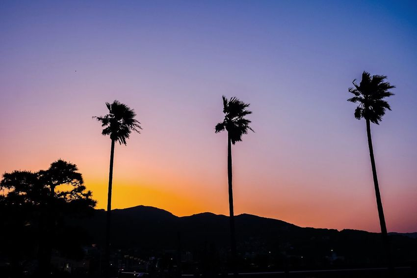 Tropical sky Palm Tree Sunset Silhouette Tree Beauty In Nature Nature Scenics Tranquil Scene Tranquility Sky Growth Mountain Mountain Range Sea And Sky Seascape Tree Trunk EyeEmNewHere