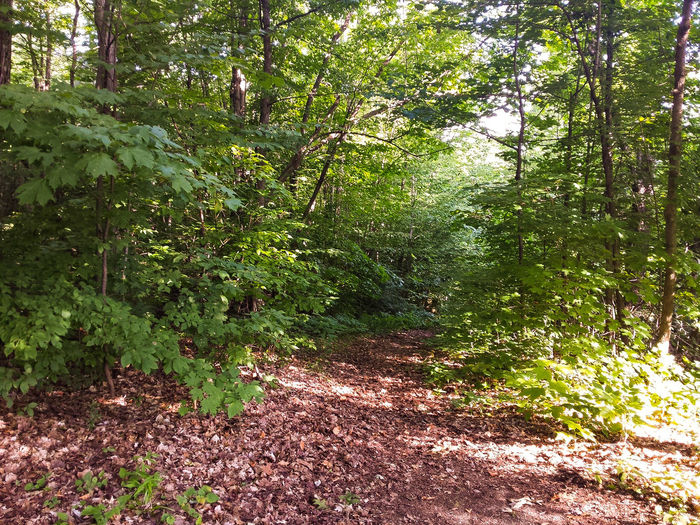 Woods WoodLand