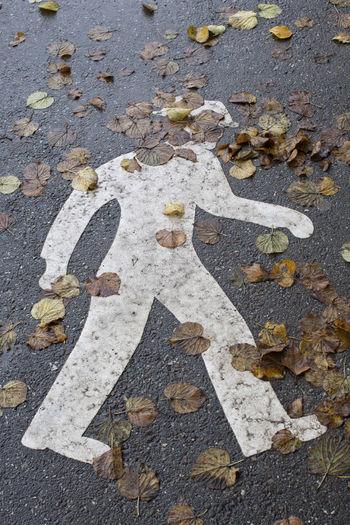 Leaves Autumn Autumn colors Communication No People Leaf Footpath Pedestrian Walkway Rainy Days Wet Walking Flaneur