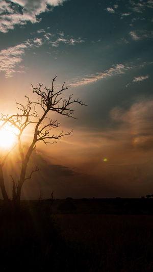 rays Sky Sunset