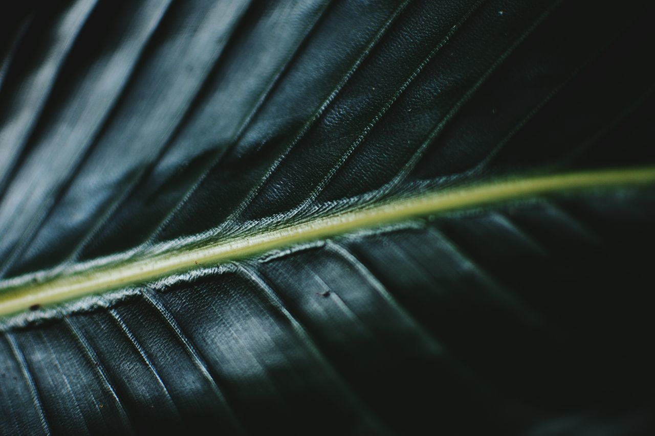 close-up, selective focus, leaf, plant part, green color, no people, animal, animal wildlife, animal themes, full frame, one animal, pattern, animals in the wild, natural pattern, nature, beauty in nature, day, backgrounds, plant, insect