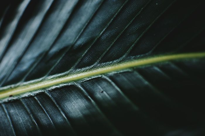 de rerum natura Close-up Nature The Still Life Photographer - 2018 EyeEm Awards