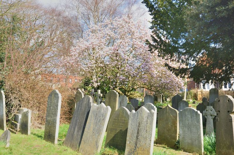 Old Gravestones in Hampstead London Beauty In Nature Growth Tombstone Cemetery Grave Memorial Death Outdoors Tombstones English Creepy Ancient Flower
