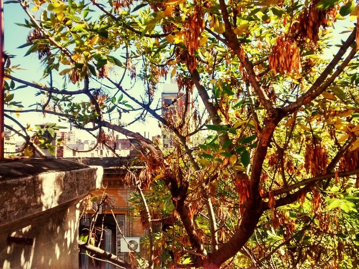 Autumn Colors Sunshine Buenos Aires Argentina Photography