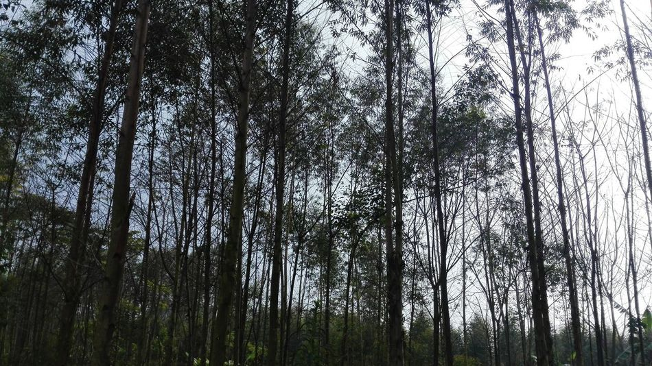 My Home Town! Home Town Trees Forest Fresh Air