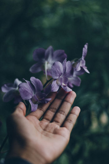Cropped hand touching purple flowers