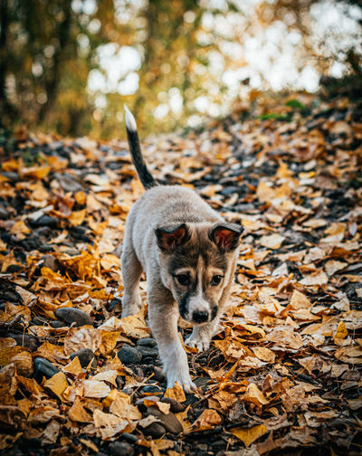 Portrait of a dog on dry leaves