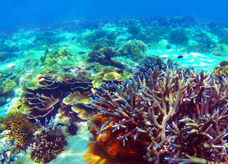 Beautiful Coral reef in Andaman sea ,Nyaung Oo Phee island Nyaung Oo Phee Island Animal Themes Animals In The Wild Beauty In Nature Coral Day Large Group Of Animals Multi Colored Nature No People Outdoors Reef Sea Sea Life Swimming UnderSea Underwater Water