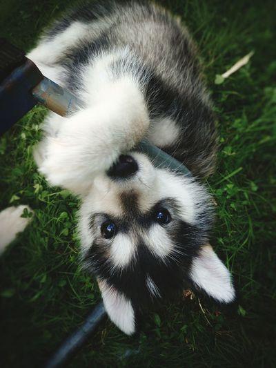 Pets Dog Cute