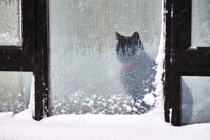 View of cat in snow
