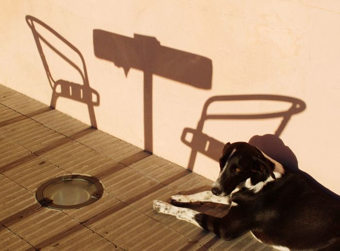 Dog in the sun with chair and table shadows Waiting Table Chair Daylight High Angle View Presence Analogue Photography EyeEm Selects Seat Shadow Sunlight Chair No People One Animal Animal Outdoors Wall - Building Feature Domestic Animals Absence Pets Table Day Focus On Shadow Flooring Relaxation