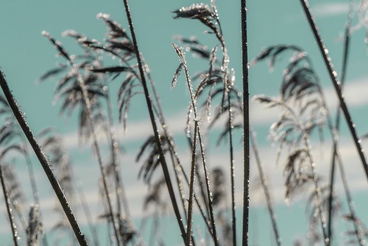 Dried Plant Sky And Clouds Grass Nature Beauty In Nature Light And Shadow Shining Outdoors Plant Tranquility Backgrounds Water Grassland Countryside Magic Still Life Water Flower Cold Temperature Close-up Plant Drop Blade Of Grass Frozen Frost Ice Calm Tranquil Scene