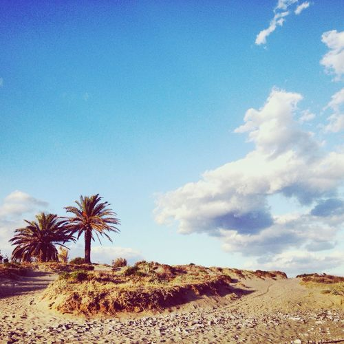 Life is great Life Palm Tree Sand Sea And Sky Beach Beautiful Nature Nature Nature Photography Blue Sky Clouds And Sky Relaxing Moody Sky Sunset Grass Street Photography