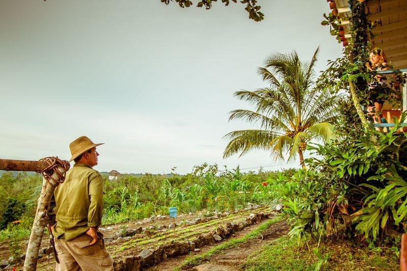 Farmer Farmer Tobacco Field Agriculture Palm Tree Outdoors Nature Men Working Tree Vinales Cuba Flowers,Plants & Garden Scenics Coffee Plant Tranquil Scene Cuba Lush Foliage Pinar Del Rio Farmland Cuban Tobaco