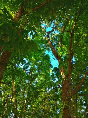 Nature Photography Nature Greenery Forest Earth Trees And Sky Blue Sky Light & Shade