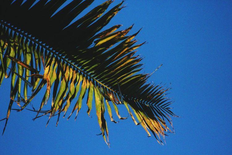 Leafs Palm Tree
