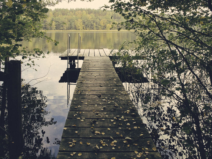 Plant Tree Water Lake Nature Direction Day The Way Forward No People Reflection Beauty In Nature Tranquility Pier Growth Tranquil Scene Outdoors Wood - Material Footpath Sunlight Wood Paneling Long