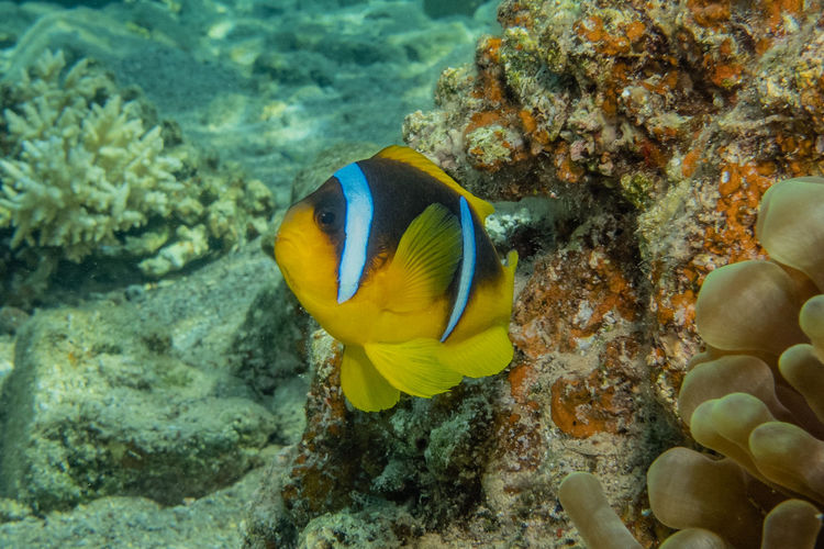 Coral reefs and