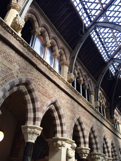Museum Of Natural History Oxford Architecture Architectural Detail Architecturelovers Architectural Feature Arches Glass Ceiling Structures & Lines Structures Metal Structure Columns Light And Shadow Light