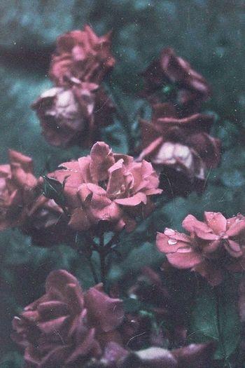 Beautiful Glower Pale Amazing