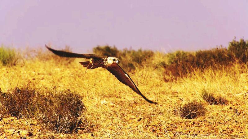 Eagle Eagle Eagle Portrait Eagle - Bird Eaglephotography Birds Bird Bird Of Prey Flying Spread Wings Bird Sky Grass