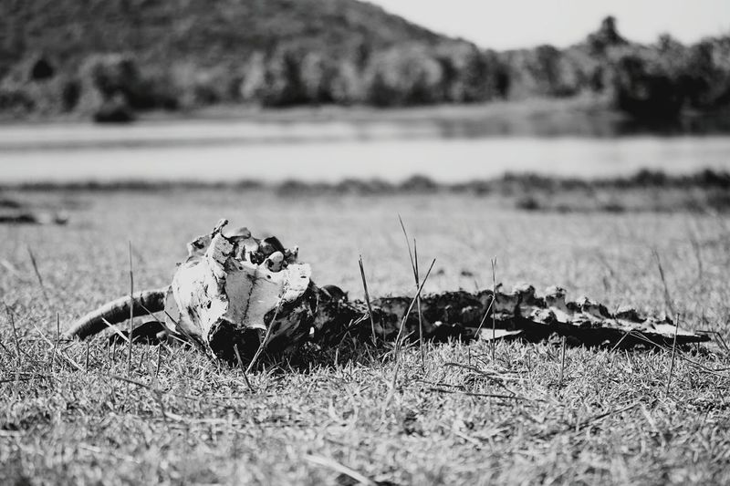 Nothing Left Harsh Nature Taking Photos Black And White Light And Shadow India EyeEm Best Shots