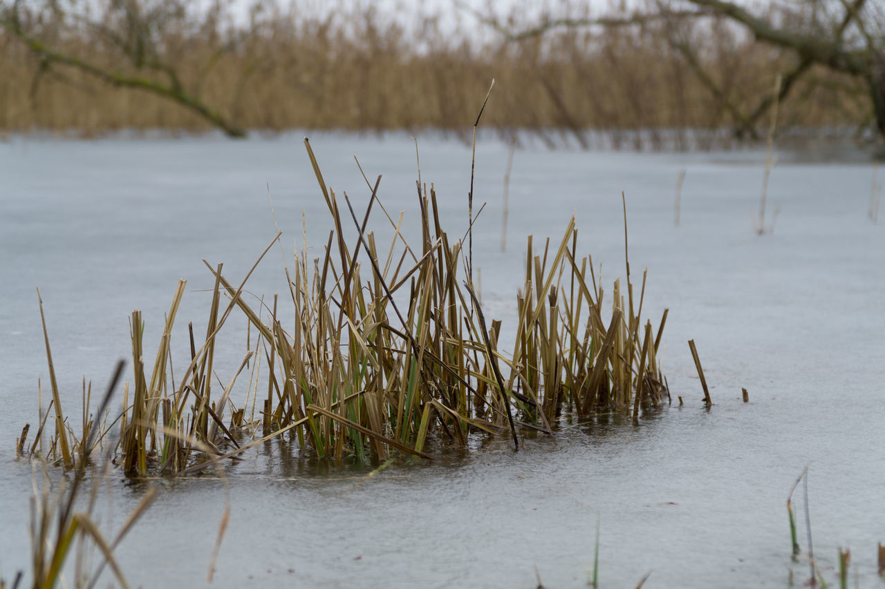 Close-Up Of Plants Against River During Winter