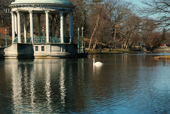Roger Williams Park Swan Gazebo Summertime Funtimes Nature EyeEm Nature Lover