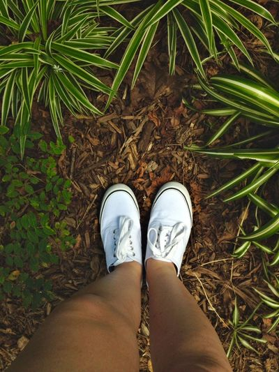 New shoes! I think I am in love #shoes #nature #tumblr
