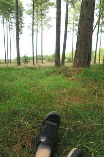 Shoe Low Section Human Leg Human Body Part Personal Perspective Grass One Person Tree Human Foot Nature Forest Day Real People Lifestyles Outdoors Walking Thetford Thetford Forest Norfolk Freshness Scenics Tree Trunk Tranquility Tranquil Scene Green Color
