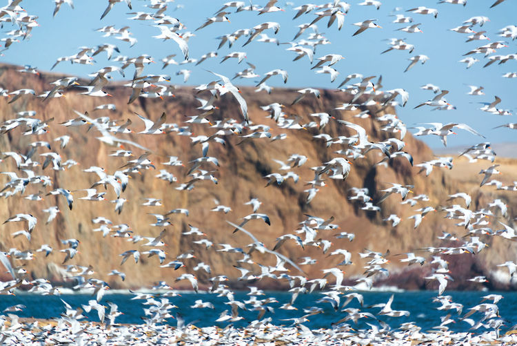 Birds Flying Over Sea