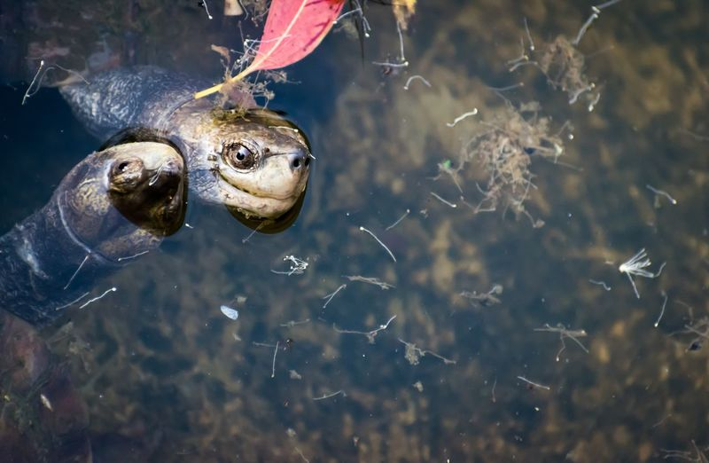 EyeEm Selects Animal Wildlife Animal Themes Animals In The Wild Close-up One Animal No People Day Outdoors Water Nature Tortoise Tortoise Shell
