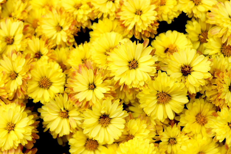 close up of yellow flowers Backgrounds Beauty In Nature Blooming Blumen Botany Close-up Detail Flower Flower Head Fragility Freshness Full Frame Gelb Gelbe Blumen🌾 Growth Hintergrund Hintergrundgestaltung Macro Natural Pattern Nature No People Plant Spring Summer Yellow
