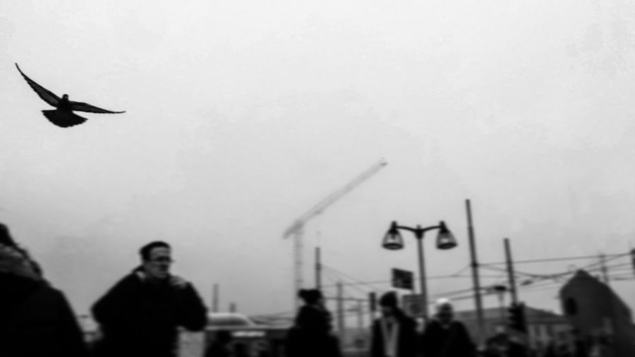 Flying Silhouette Real People Men Outdoors Sky Day Bird People Venice Piazzaleroma Italy Routine Movimento Blackandwhite