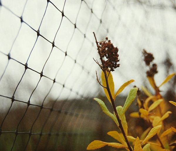 Close-up of flower plant against fence