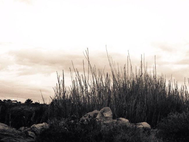 untitled NEM Submissions NEM Black&white NEM Silence NEM Landscapes