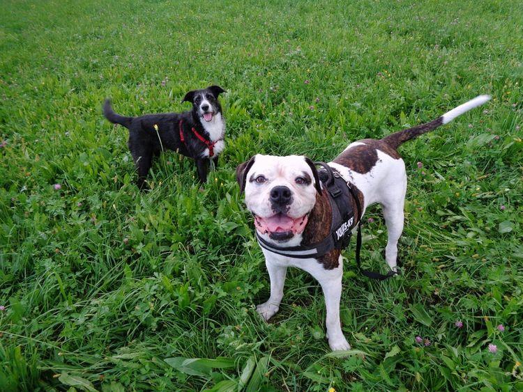 """Ok, now say """"cheeeeese""""! Taking Photos Dog Days Dogs I Love My Dog I Love My Dogs Dog❤ Enjoying Life Dogoftheday Dogslife Doglover"""