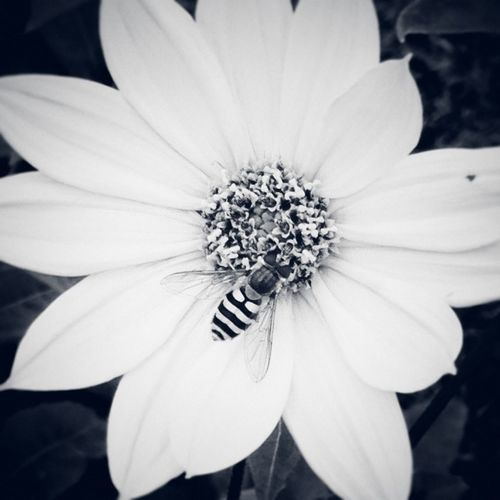 Mobilephotography Supernormal Macro_bugs Bw_flower