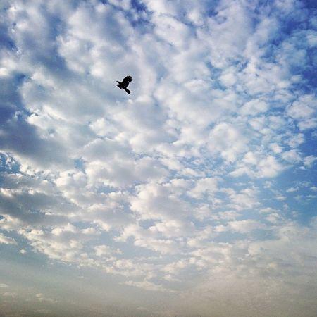 Skyshot Cloudobsession