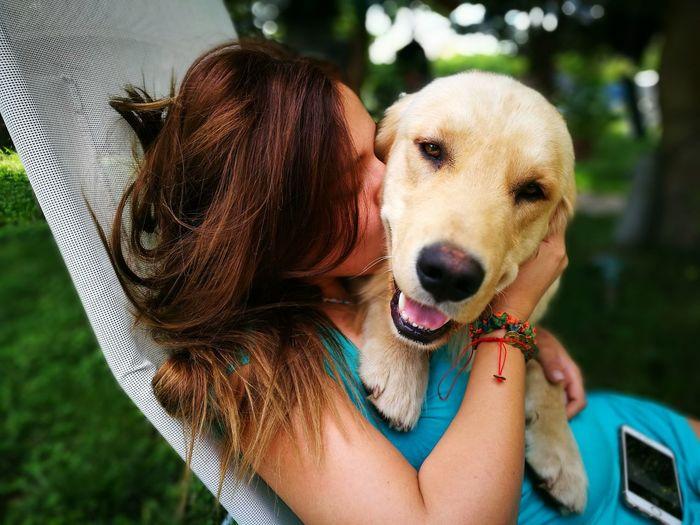 Dog Goldenretriever Love Newpet House Huawei P9 Leica