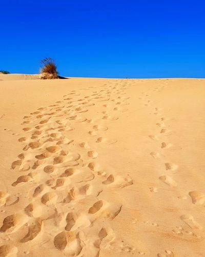 Sand Dune Clear Sky Desert Blue Sand Shadow Hill Arid Climate Horizon Over Land Adventure Drought Namib Desert Barren Dry Salt Basin Mini Van Calm Rippled Stream - Flowing Water Arid Salt Flat Salt Lake Semi-arid Wilted Plant Arid Landscape