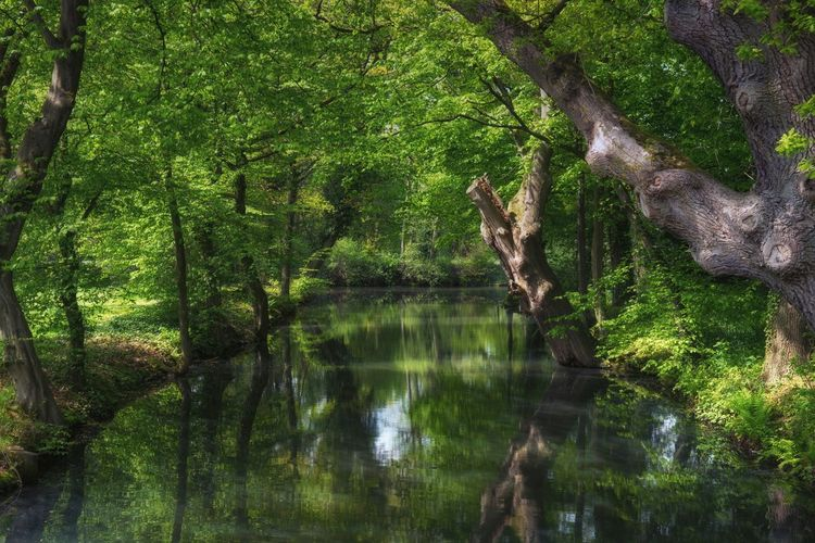 Tree Reflection Growth Nature Green Color Water Outdoors No People Lake Day Beauty In Nature Branch Tranquil Scene Tranquility Beautiful Tree Trunk Scenics Bare Tree Lost In The Landscape